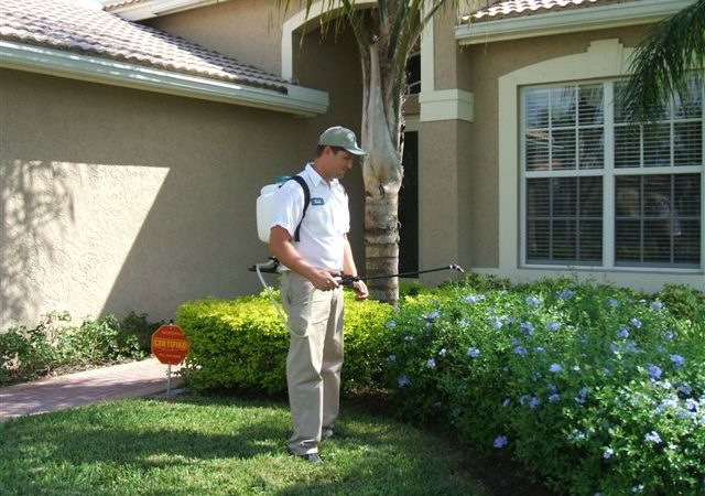 Pest Control Solutions That Work